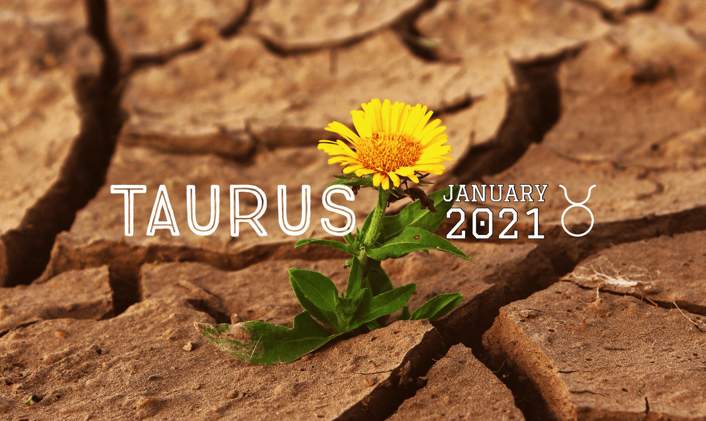 2021 01:Banner:02 Taurus